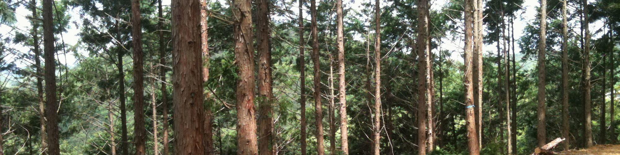 林業事業体を支援します。